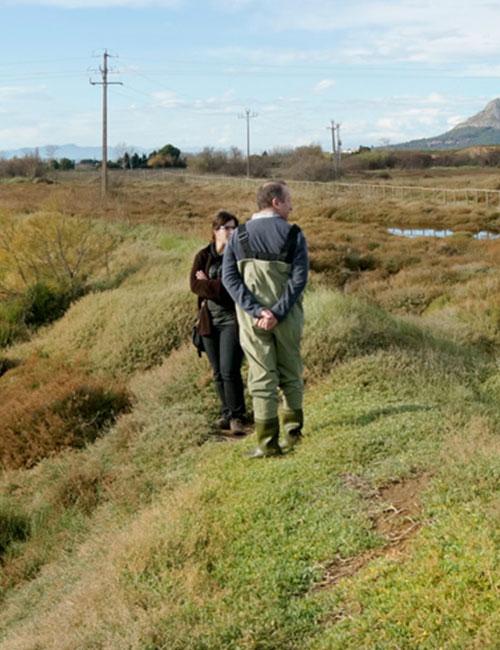 Desurbanización y restauración de la marisma de la Pletera (2014-2018)