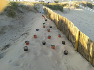 dunes_restauraci_2